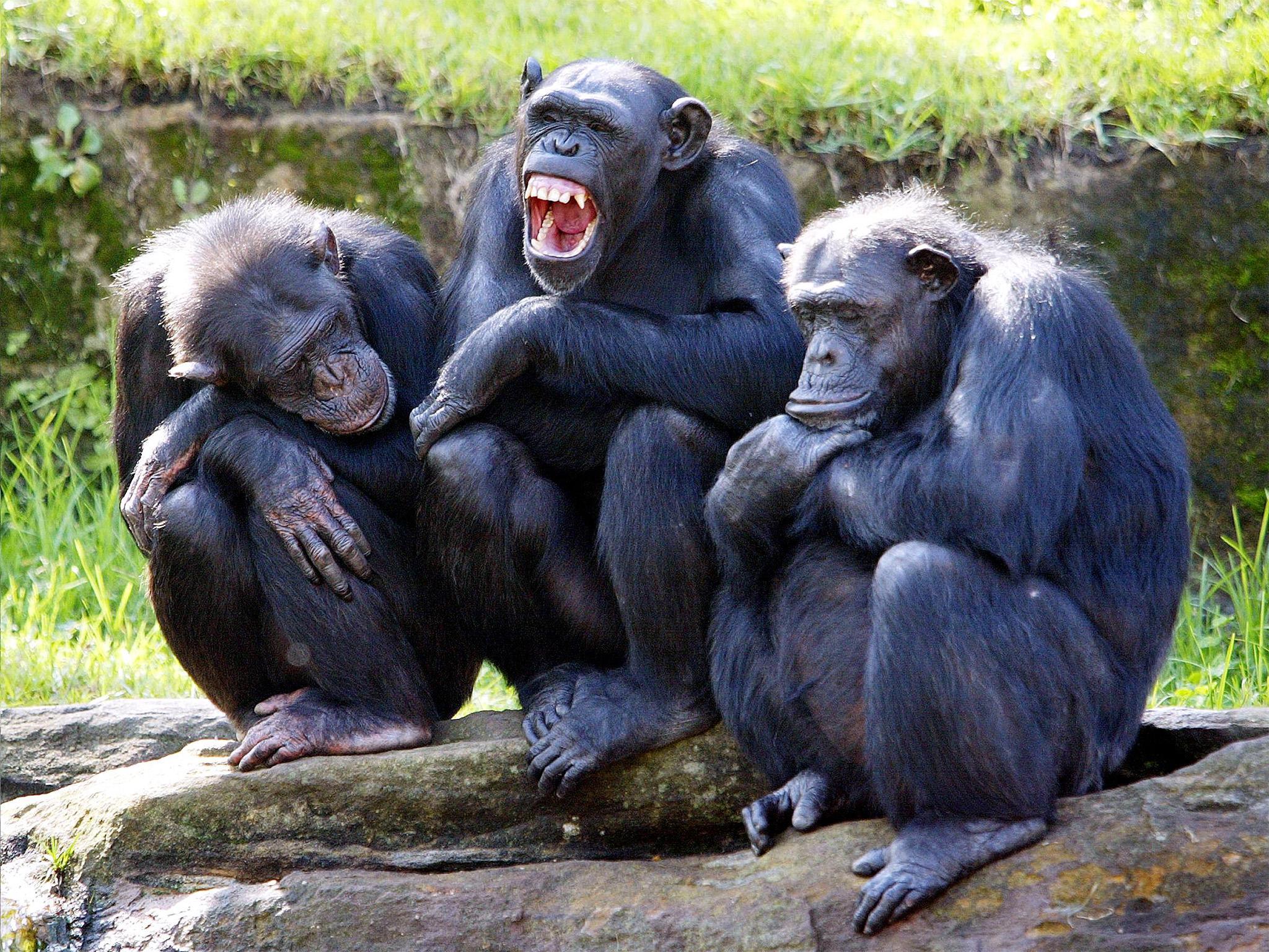 The Third Chimpanzee Ebook