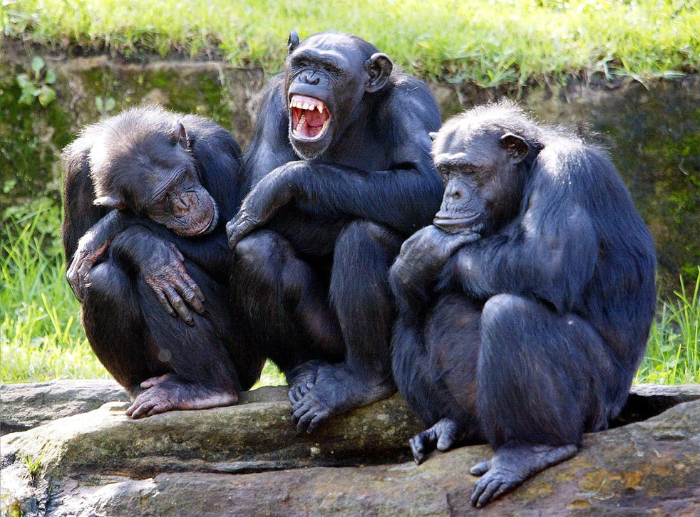 The Nonhuman Rights Project argues that chimpanzees are too intelligent and emotionally complex to be held in captivity. File photo
