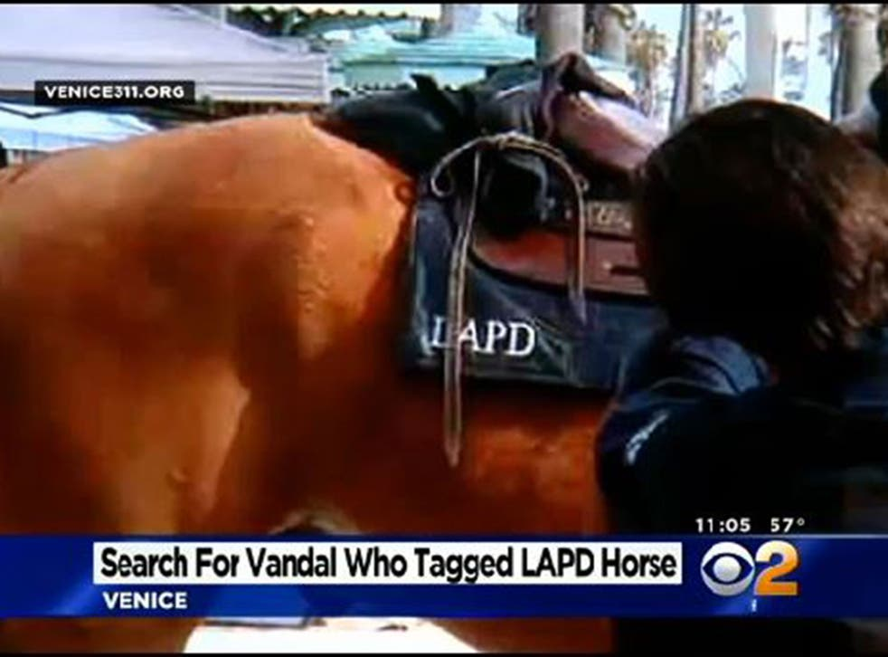 Charly the horse had 'R.B.S' inked on his backside