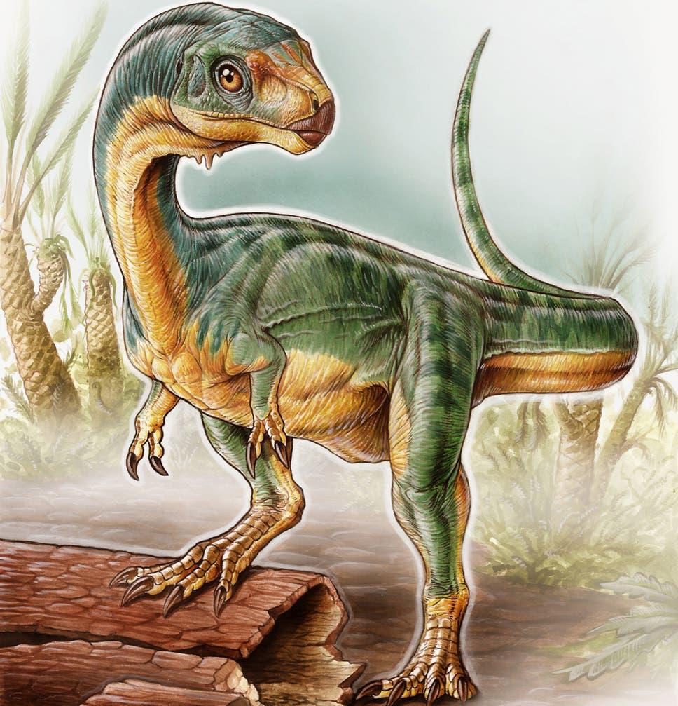 New Tyrannosaurus Like Vegetarian Dinosaur Discovered In Chile
