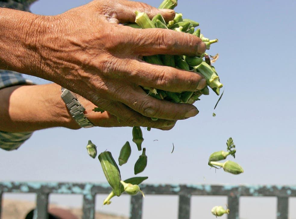 Okra is a rich source of fibre