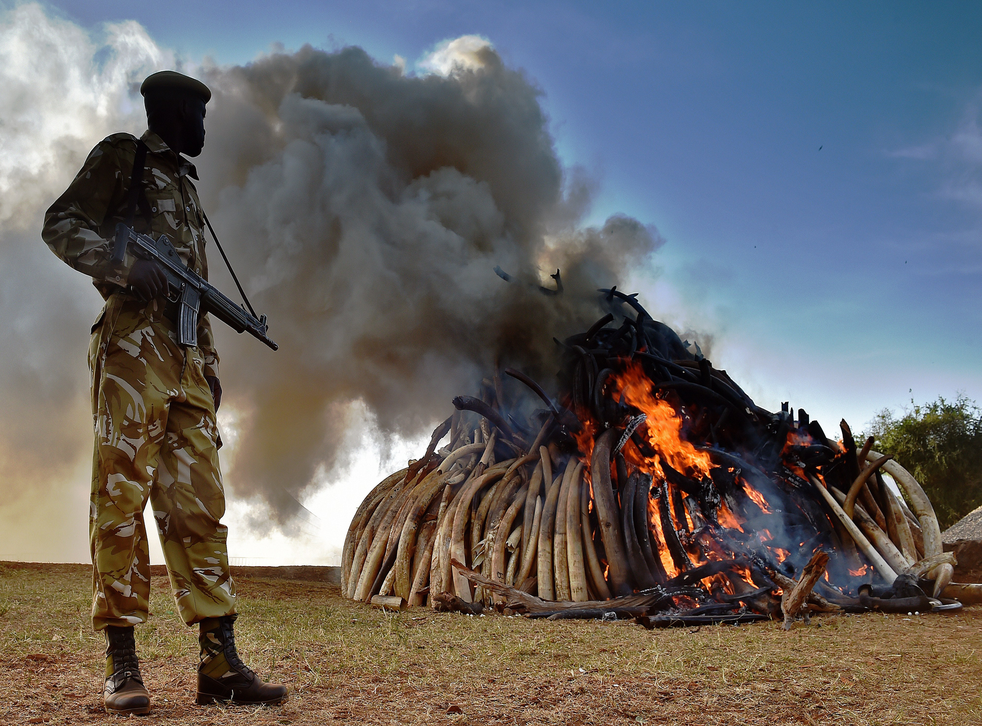 A Kenyan wildlife officer stands by 15 tonnes of burning ivory