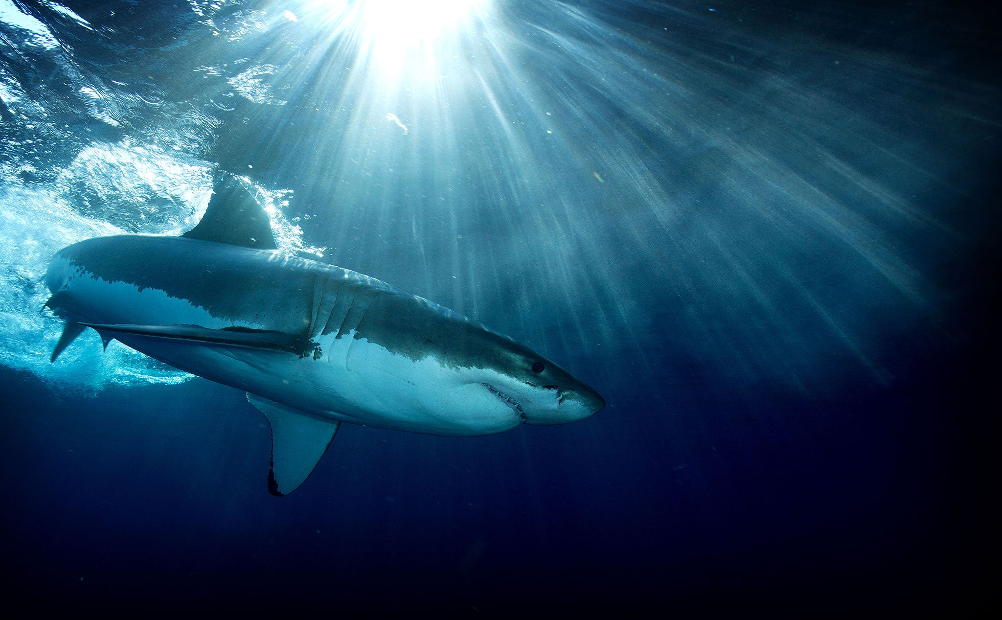 Shark attacks are increasing because we are invading their territory – no wonder they are becoming more aggressive