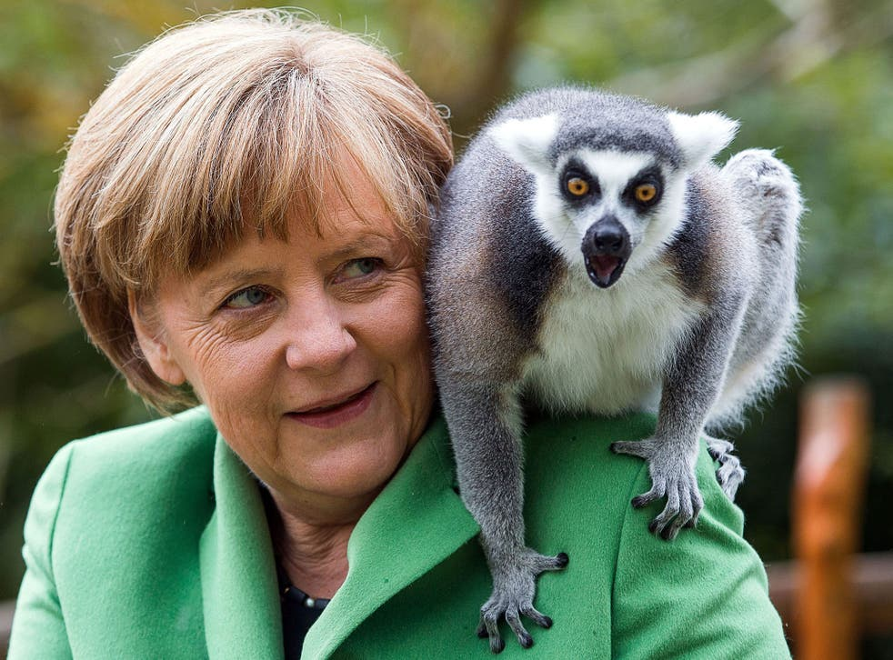 German Chancellor Angela Merkel feeds a lemur during a visit to Vogelpark Marlow (Bird Park Marlow) in Marlow, Germany. Merkel officially opened the 1.600 sqm penguin facility that will house 32 penguins, nine brown pelican and 40 Inca tern