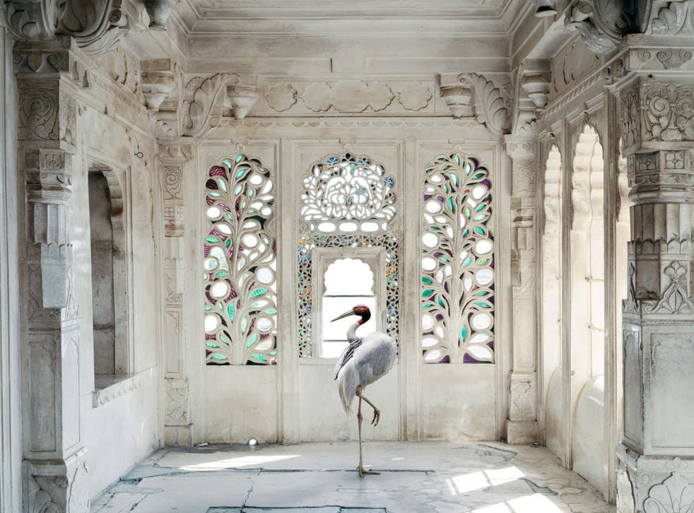 A room in the Udaipur City Palace is enhanced by Knorr superimposing a shot she took in a zoo of a sarus crane, a creature that features frequently in Indian miniatures