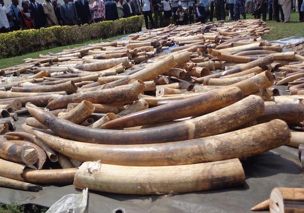 9cab4de5e8e6 Ivory trade in the US  Items worth  1.5million sold on Craigslist ...
