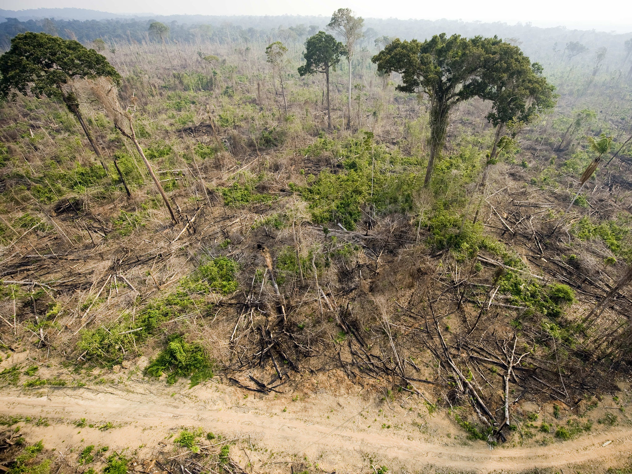 Tropical forests are now emitting more carbon than oxygen, alarming new study finds