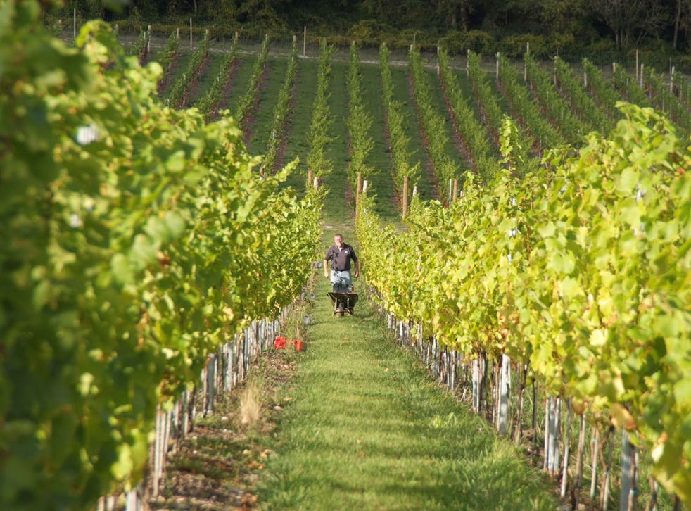 Moon walker: the tenets of biodynamic wine making require sowing grape seeds before a full moon