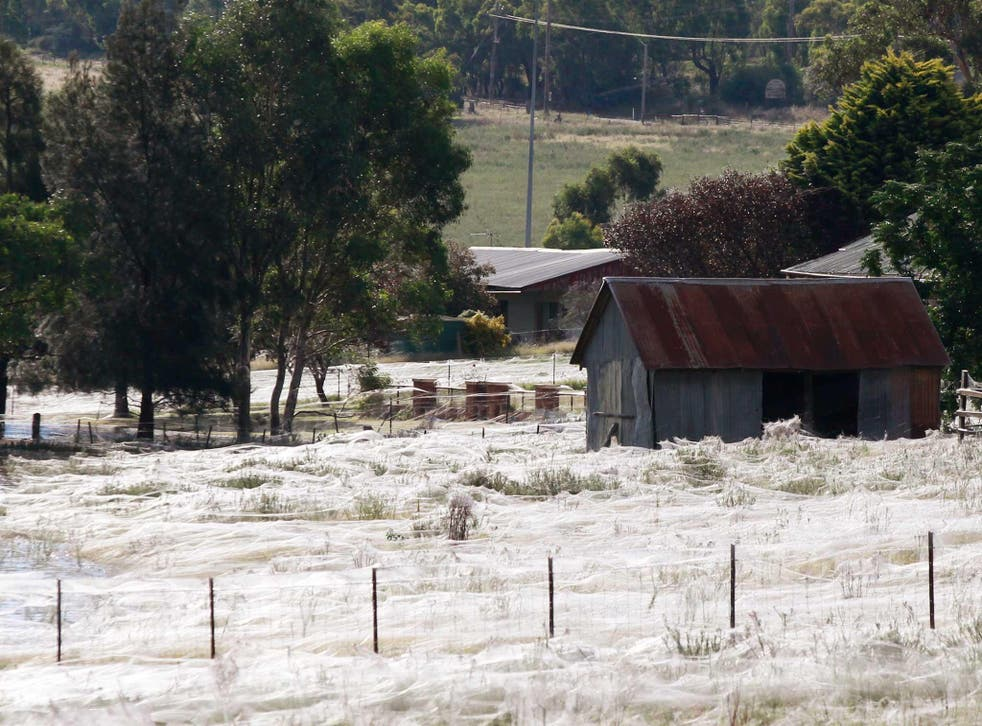 A shed in Australia is surrounding by spiders webs back in 2012