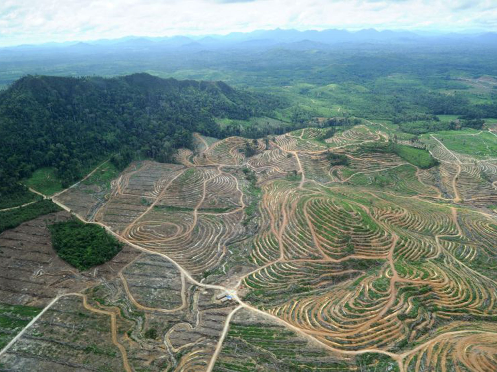 Ecologically 'disastrous' palm oil here to stay, and better than alternatives, experts say