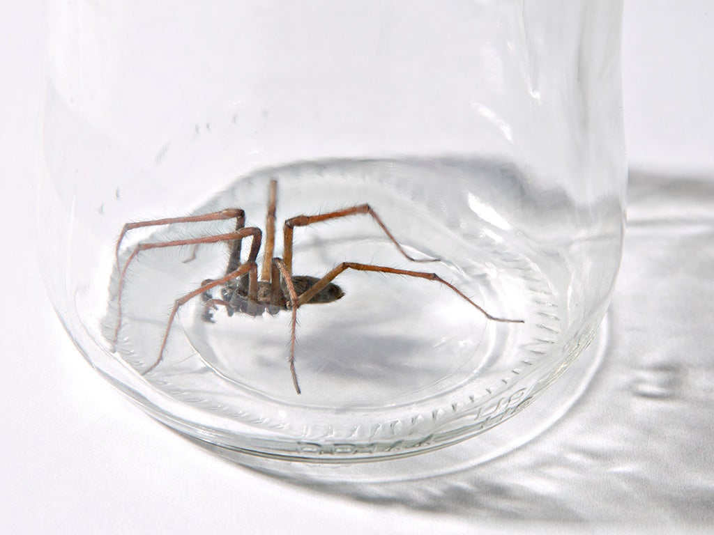 Why are we so afraid of spiders?   The Independent