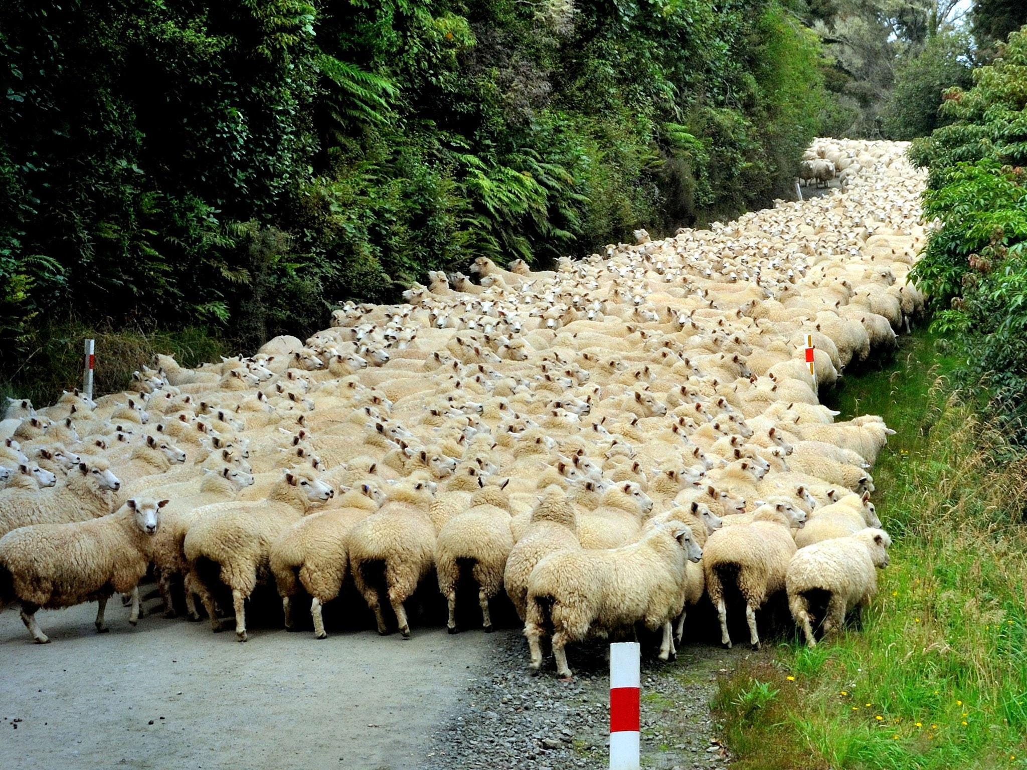 Speed dating in wales sheep