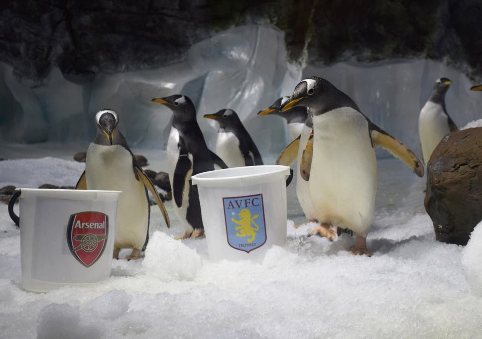 Psychic penguins have made their pick for Arsenal vs Aston