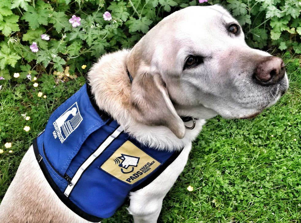 Caber is trained to help child victims of serious crimes testify