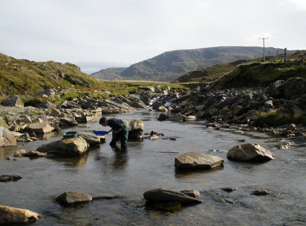 A researcher pans for gold in Ireland