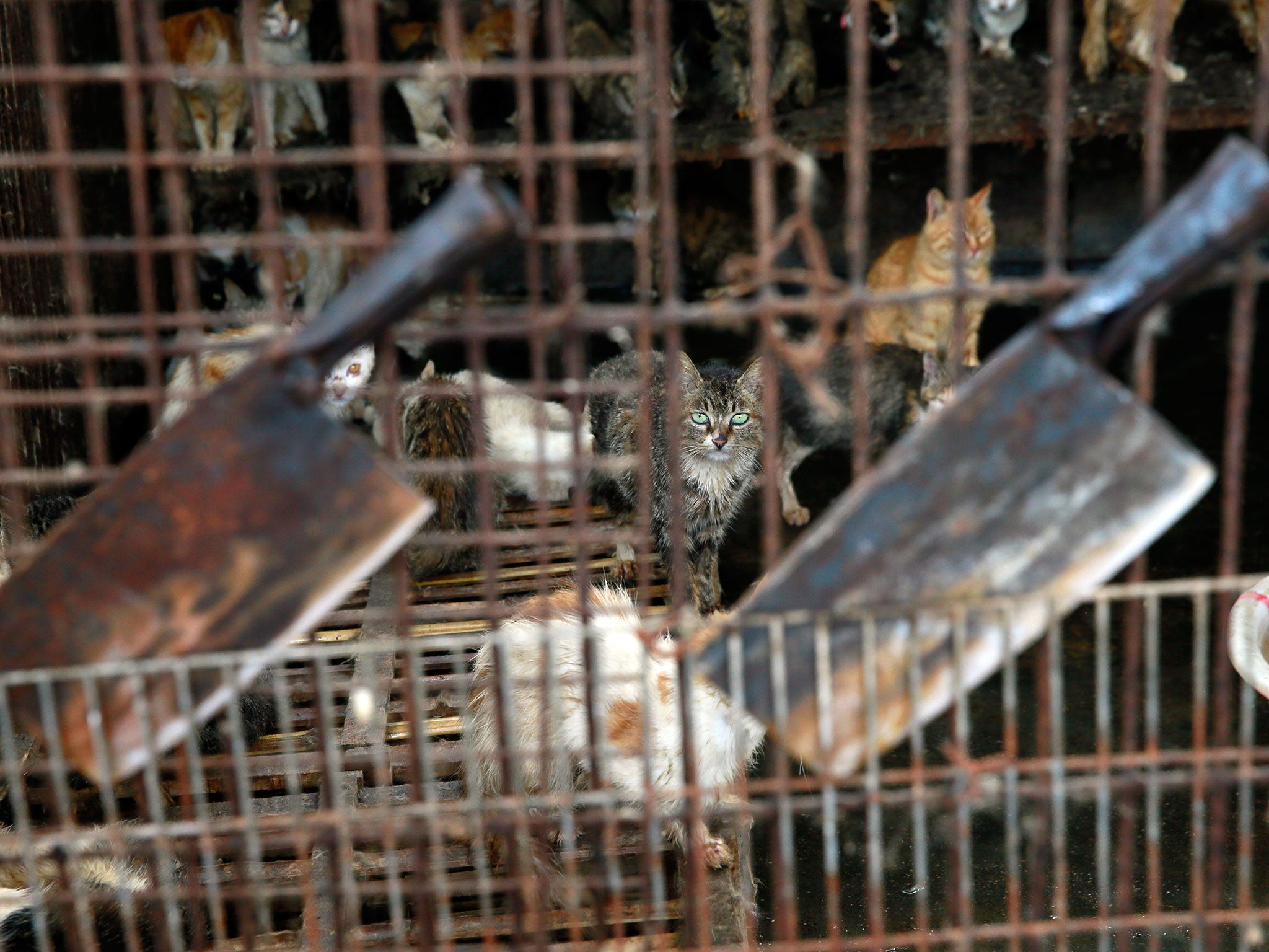 Yulin Dog Meat Festival: Dogs blow-torched alive in footage
