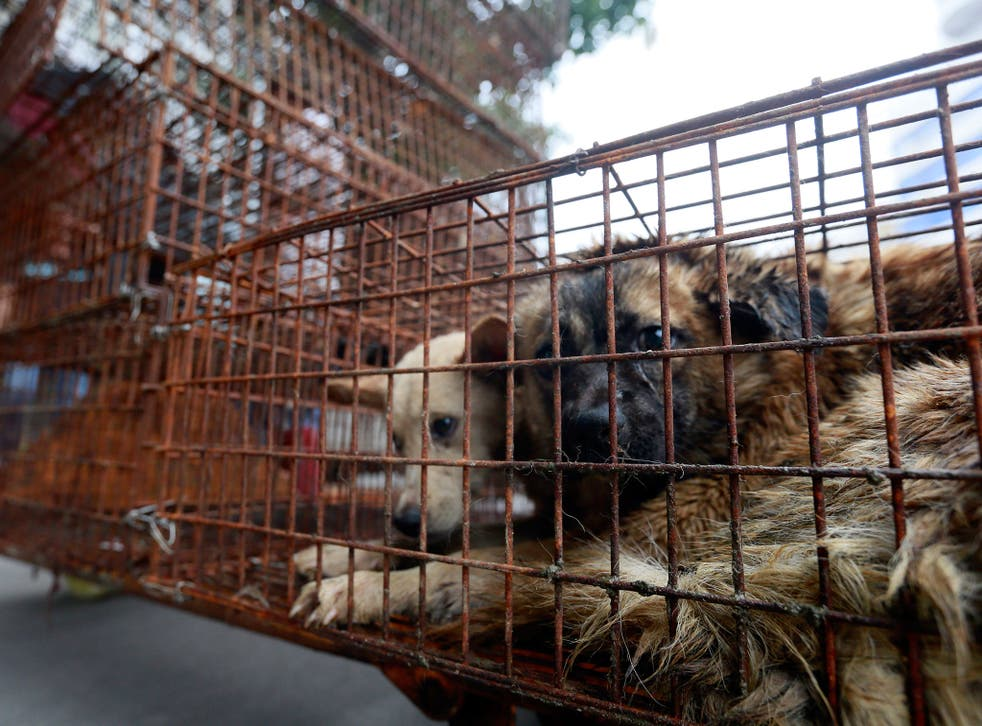 Caged dogs sit on the side of Renminzhong Road, waiting to be transferred to a slaughterhouse in a narrow alley