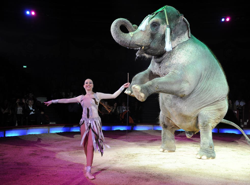 An elephant performs at Circus Krone in Munick in 2014. This image shows an elephant and circus different to the ones mentioned in the story.