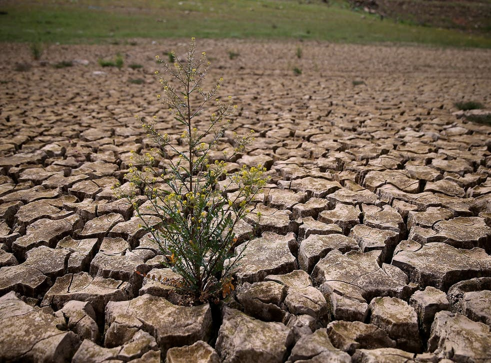 California's drought has caused the state to pass its first extensive groundwater regulations
