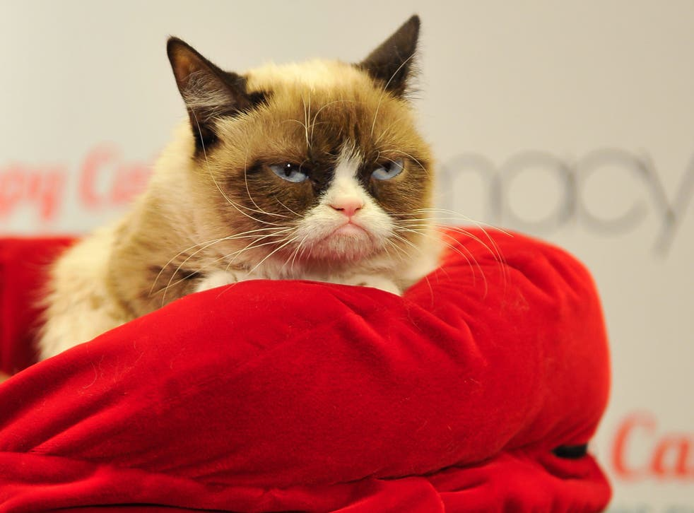 Watching Grumpy Cat videos could boost your energy, according to a study