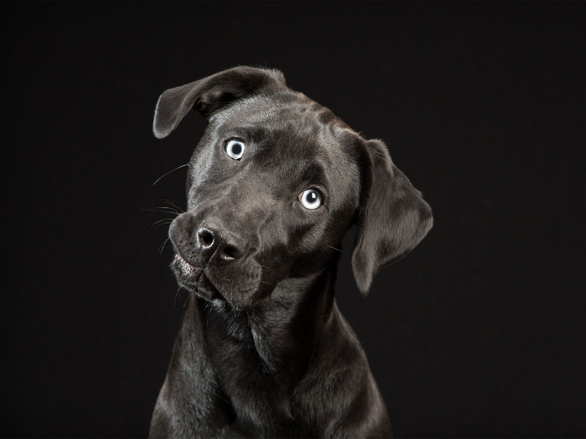 Black Dogs Project: Photographer unveils gallery of dark ...
