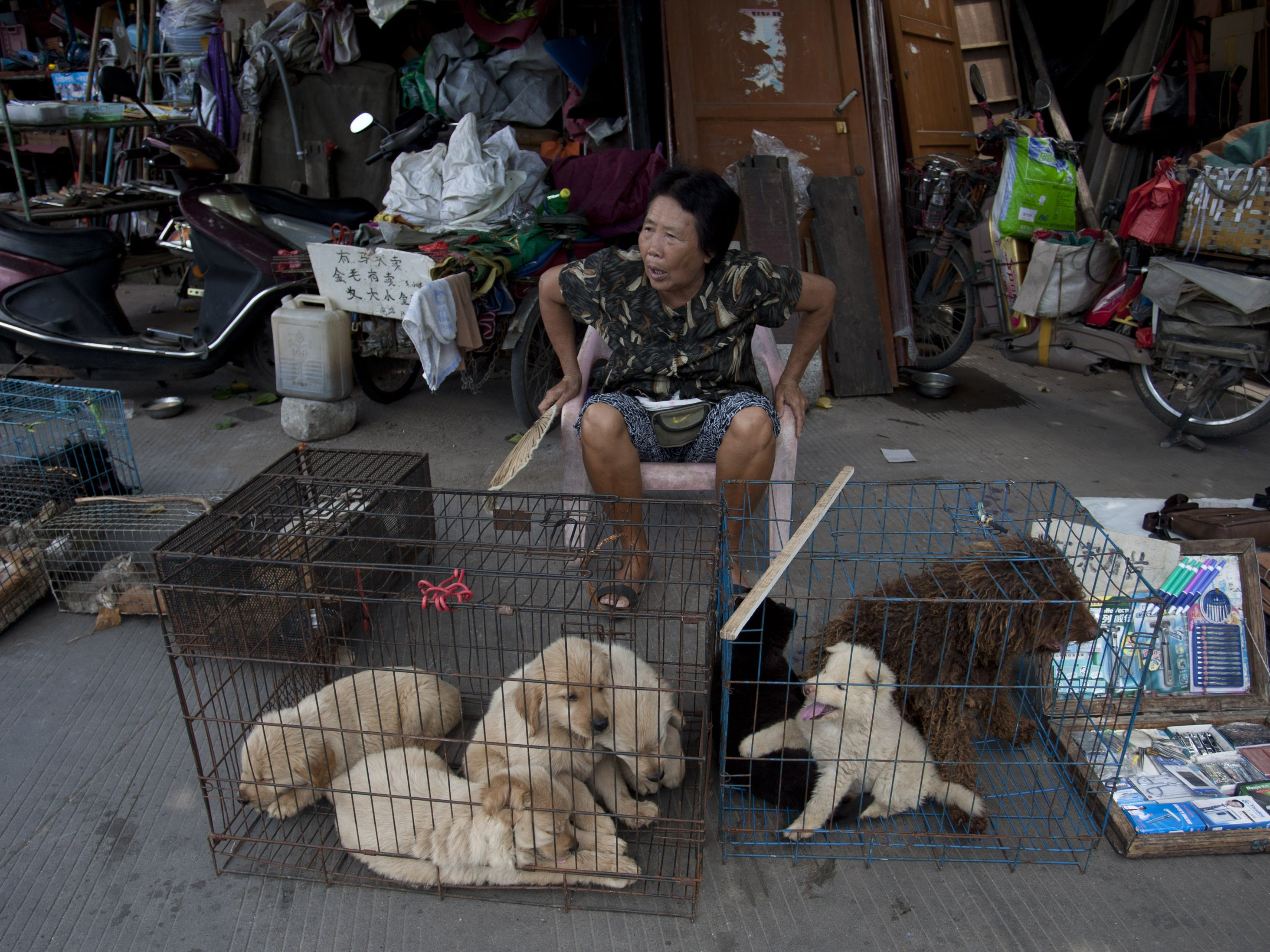 Samsclub Credit Login >> Yulin dog meat festival: When is publishing a photograph too far? | The Independent