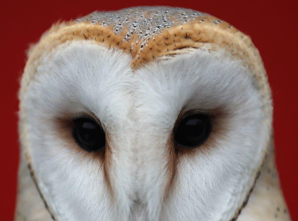 Barn owls' silent flight inspired the technology
