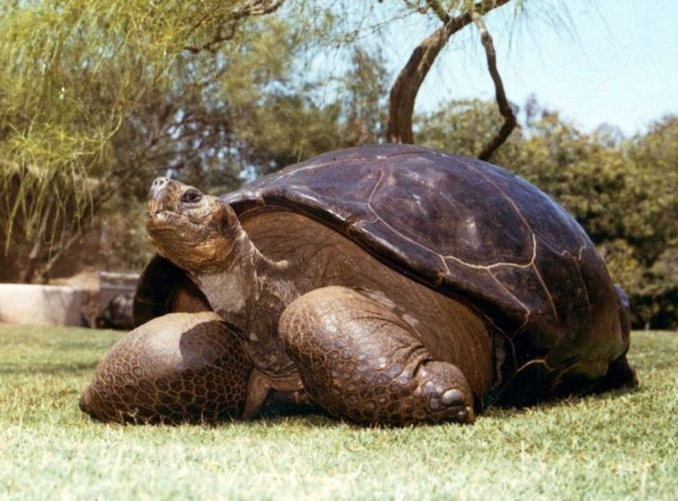 Speed the Galapagos tortoise in an undated photograph