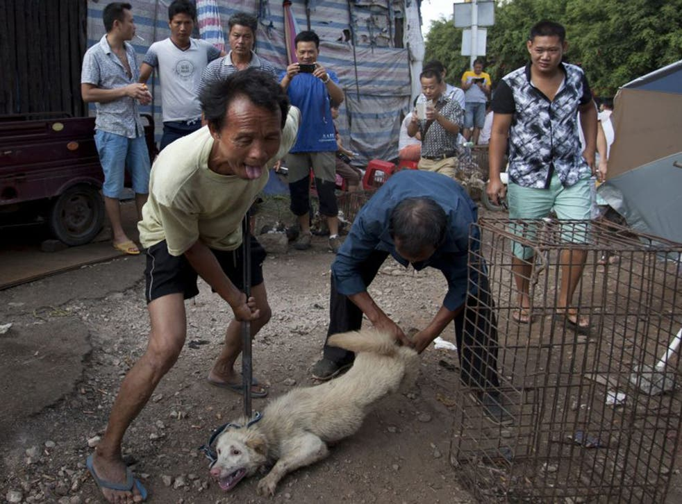 Vendors tie a dog before butchering it at the Yulin Dog Meat Festival