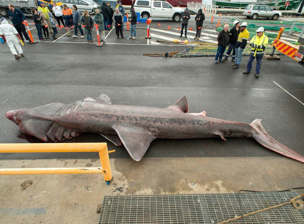 The 6.3m basking shark was caught off the west coast of Victoria