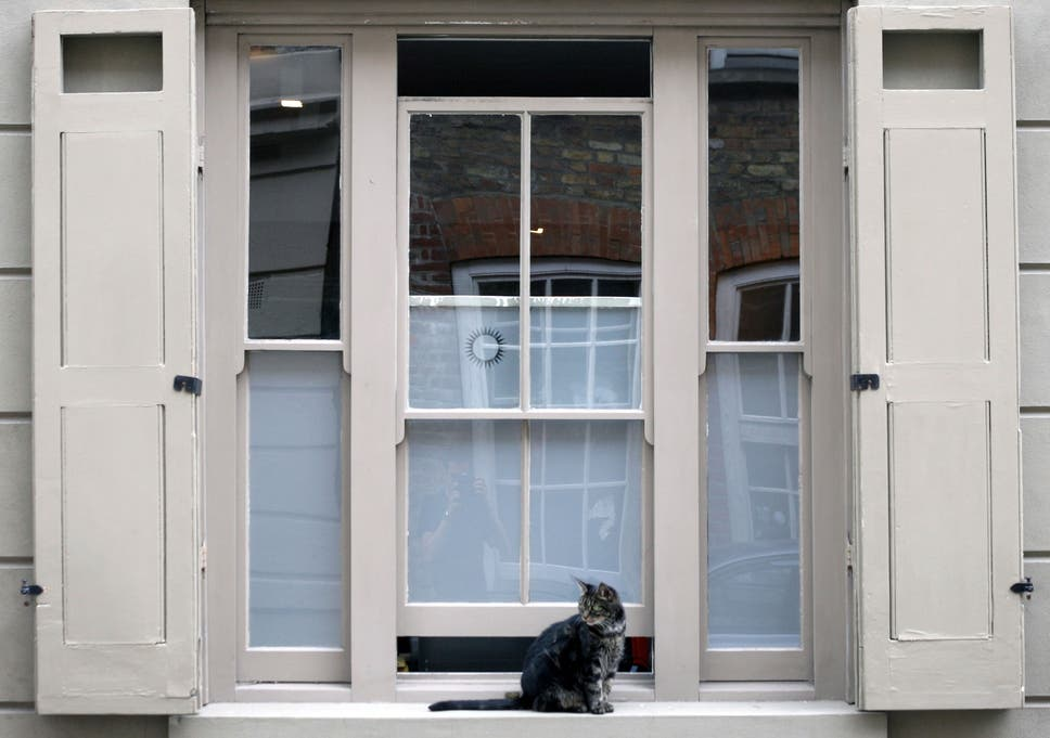 warning over cats falling out of windows during warm weather after