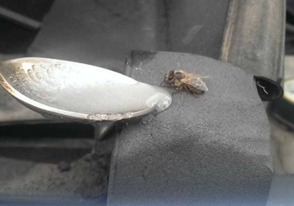 Police rescue tired bee | The Independent