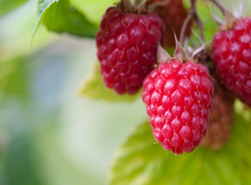 Think of Scotland when you plant raspberries because they like a slightly acid soil