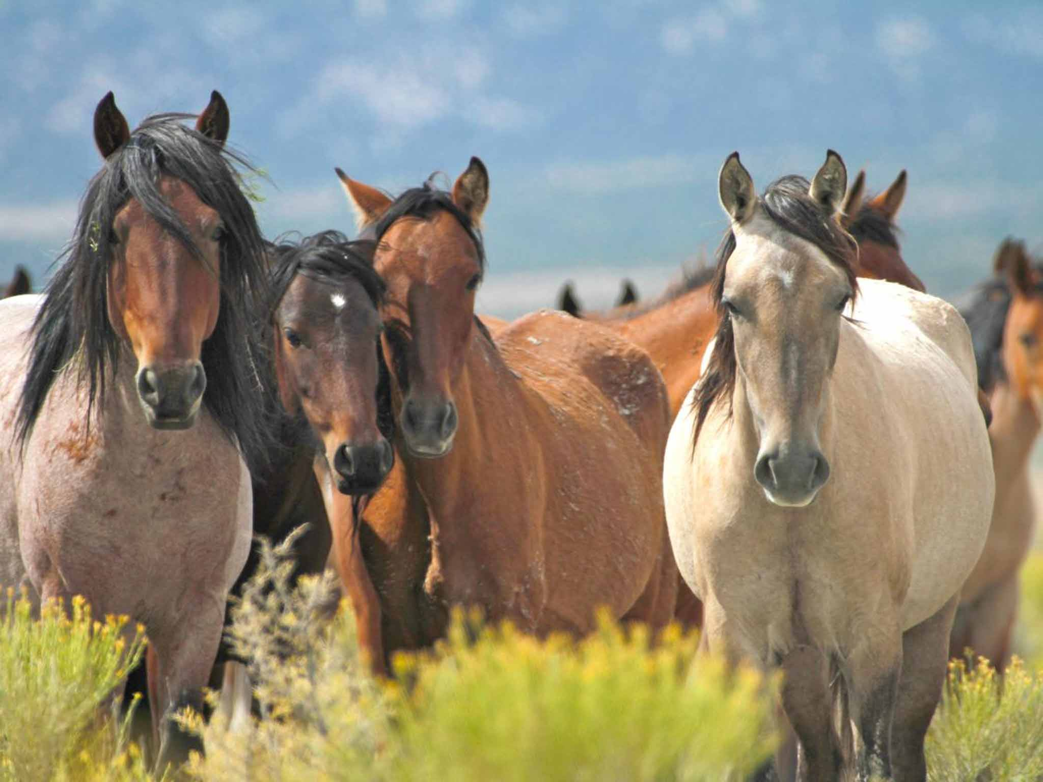 Nevada ranch where horses roam free mustang monument is a nevada ranch where horses roam free mustang monument is a pioneering refuge for wild horses the independent fandeluxe Document