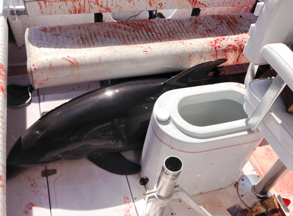 The dolphin - despite all the blood - was apparently released relatively unharmed