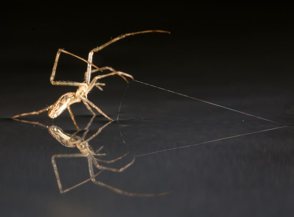 Spiders were already known to take to the air on 'ballooning' flights