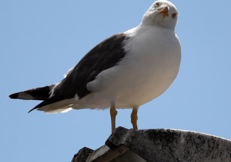 David Cameron on seagulls: We need to have a 'big