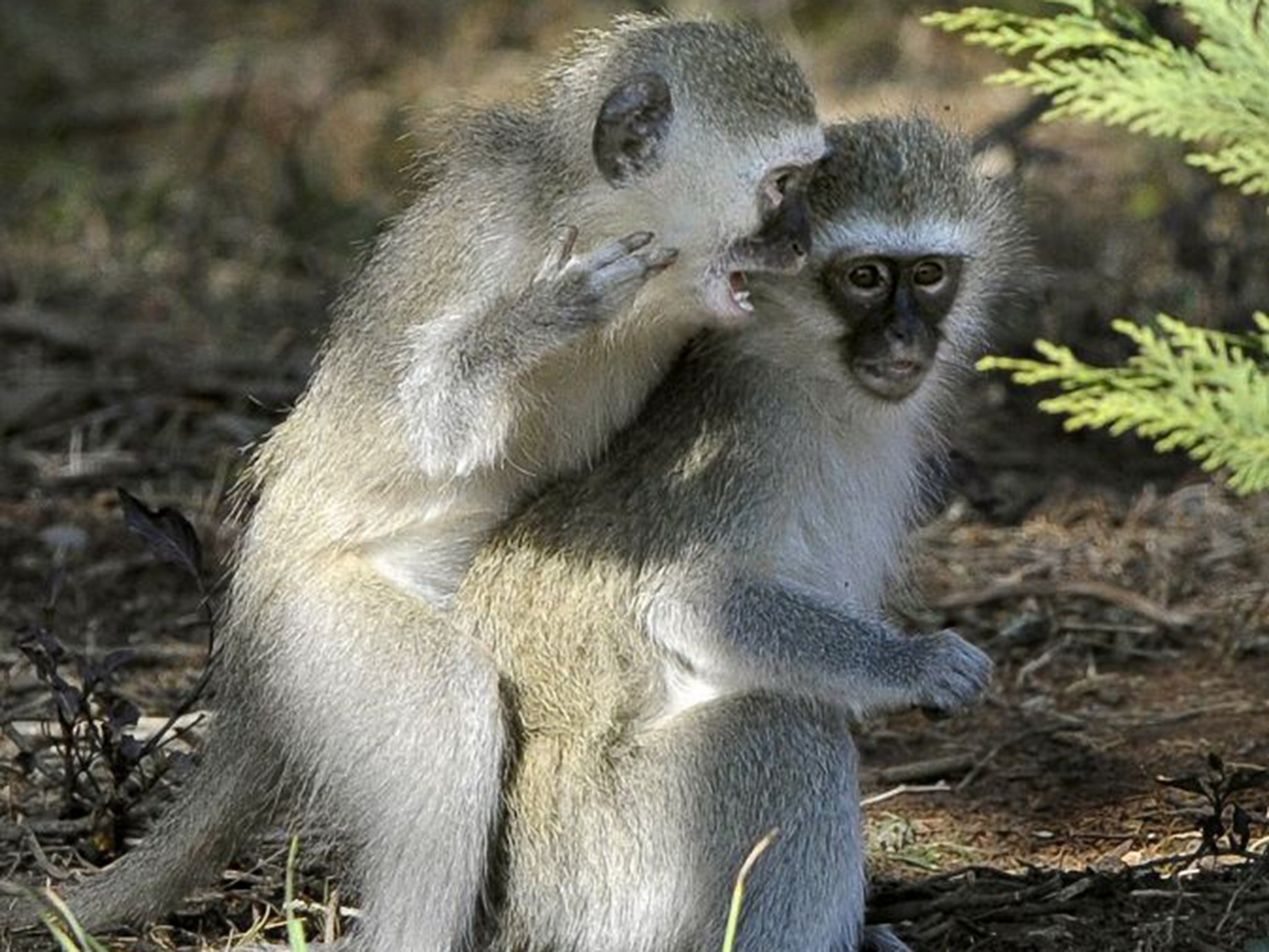 How animals communicate with each other: 5 most amazing ways