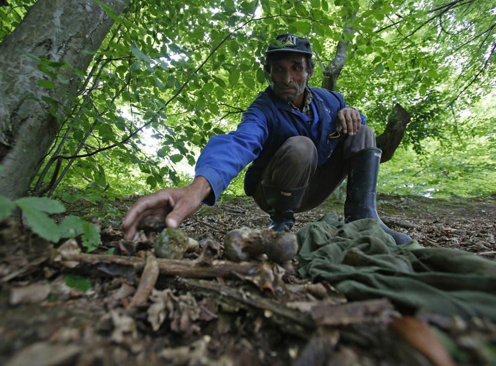 Ramiz Nukic scouring the nearby woods