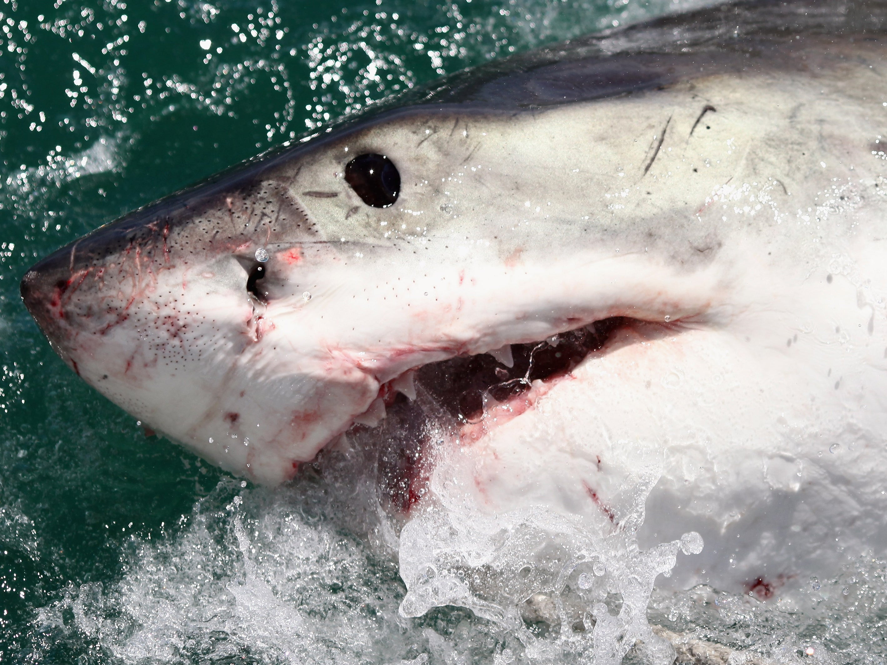 How to survive a shark attack: What to do if you encounter
