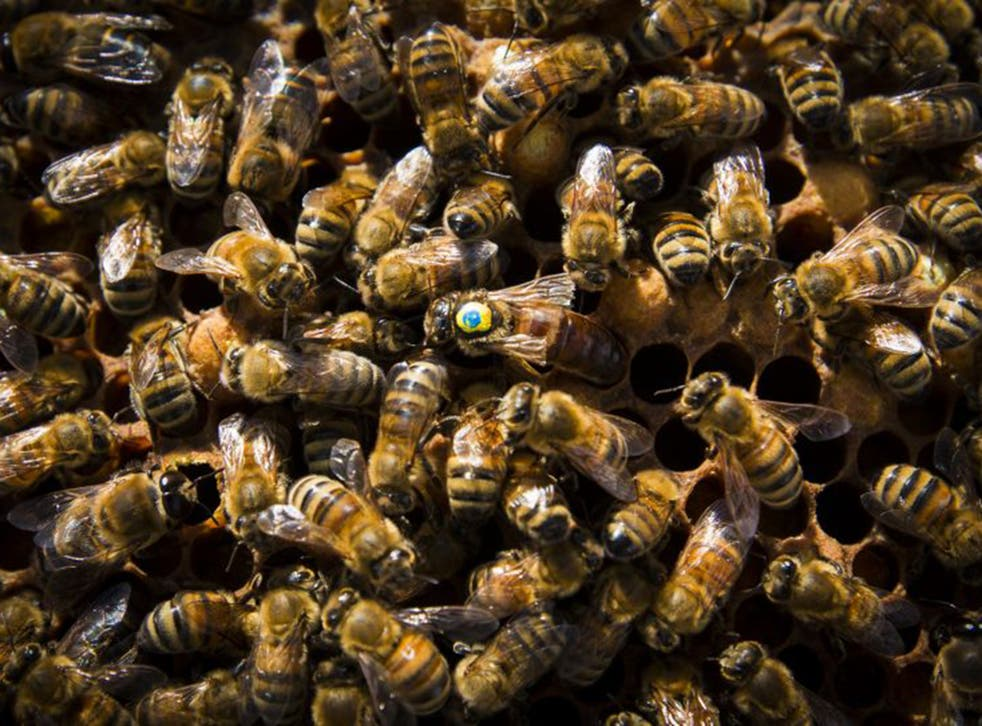The number of beehives has declined by 73 per cent, falling from a million hives in 1900 to just 270,000 in 2015 (Andrew Fox)