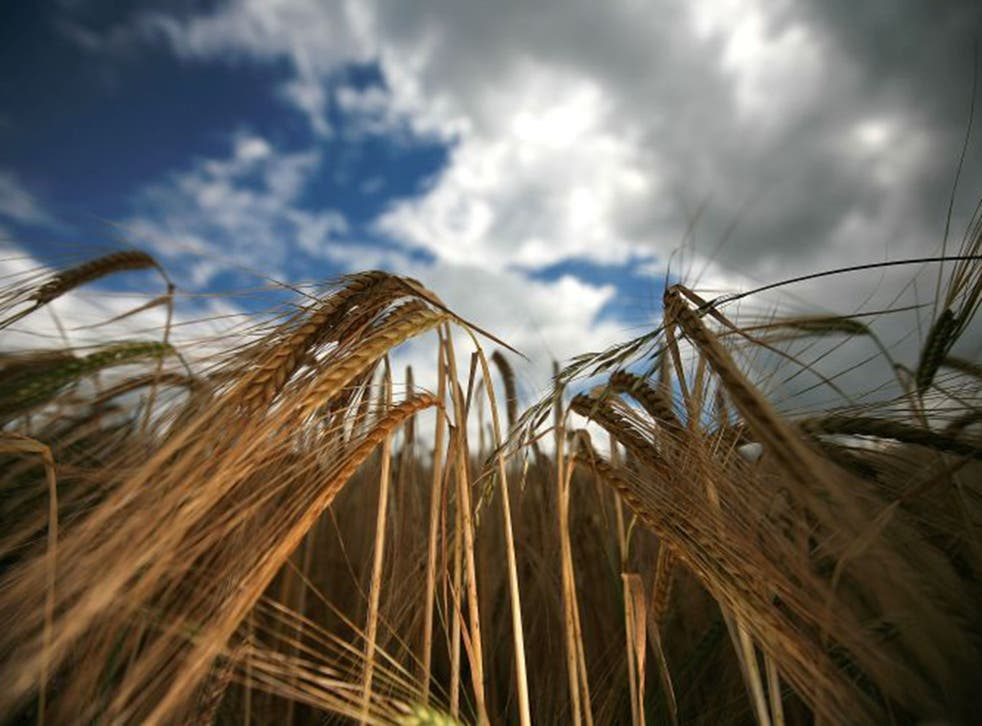 Global food demand is predicted to rise 50% by 2030, and 70% by 2050