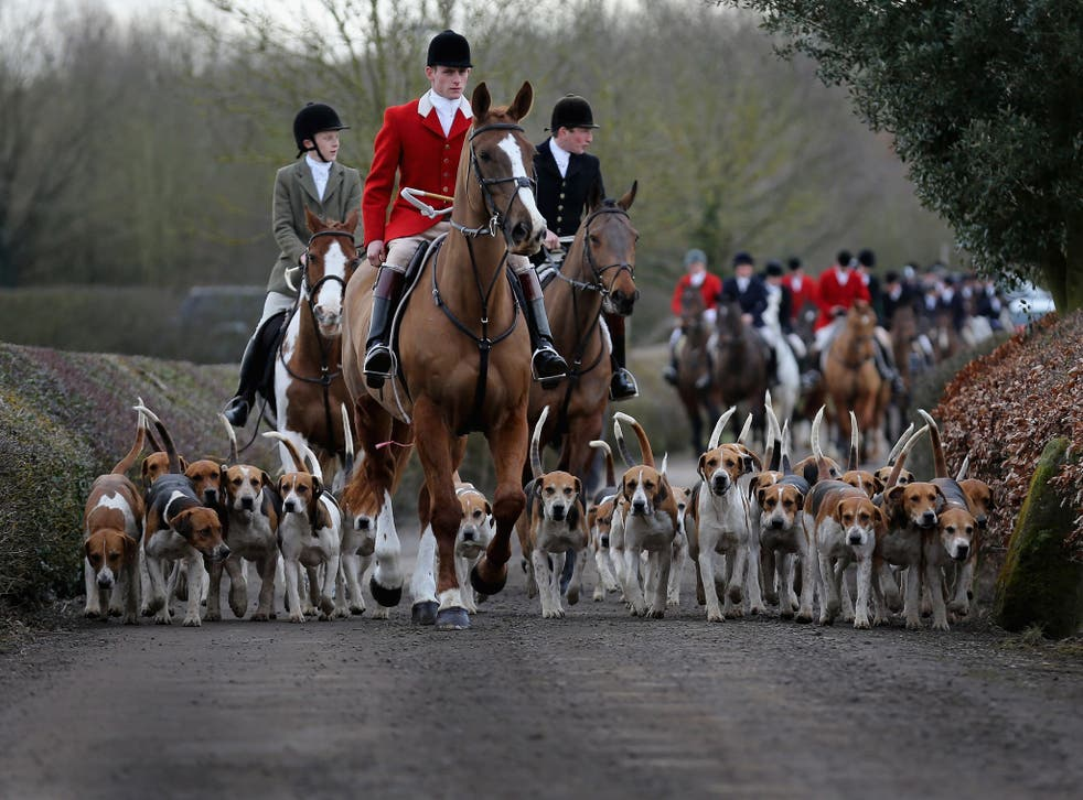 Fox hunting has been banned in England and Wales since 2004