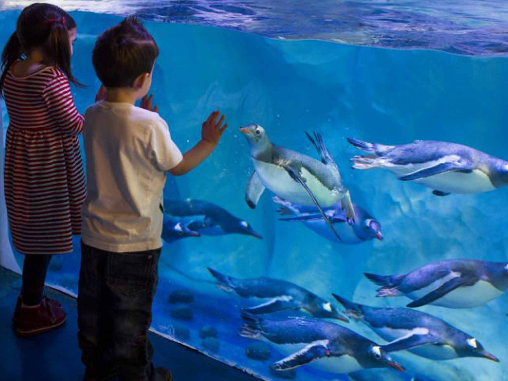 Sea Life aquariums could lose Marine Conservation Society sponsorship due to high animal death rates