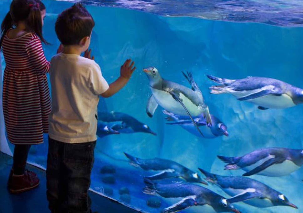 Sea Life aquariums could lose Marine Conservation Society