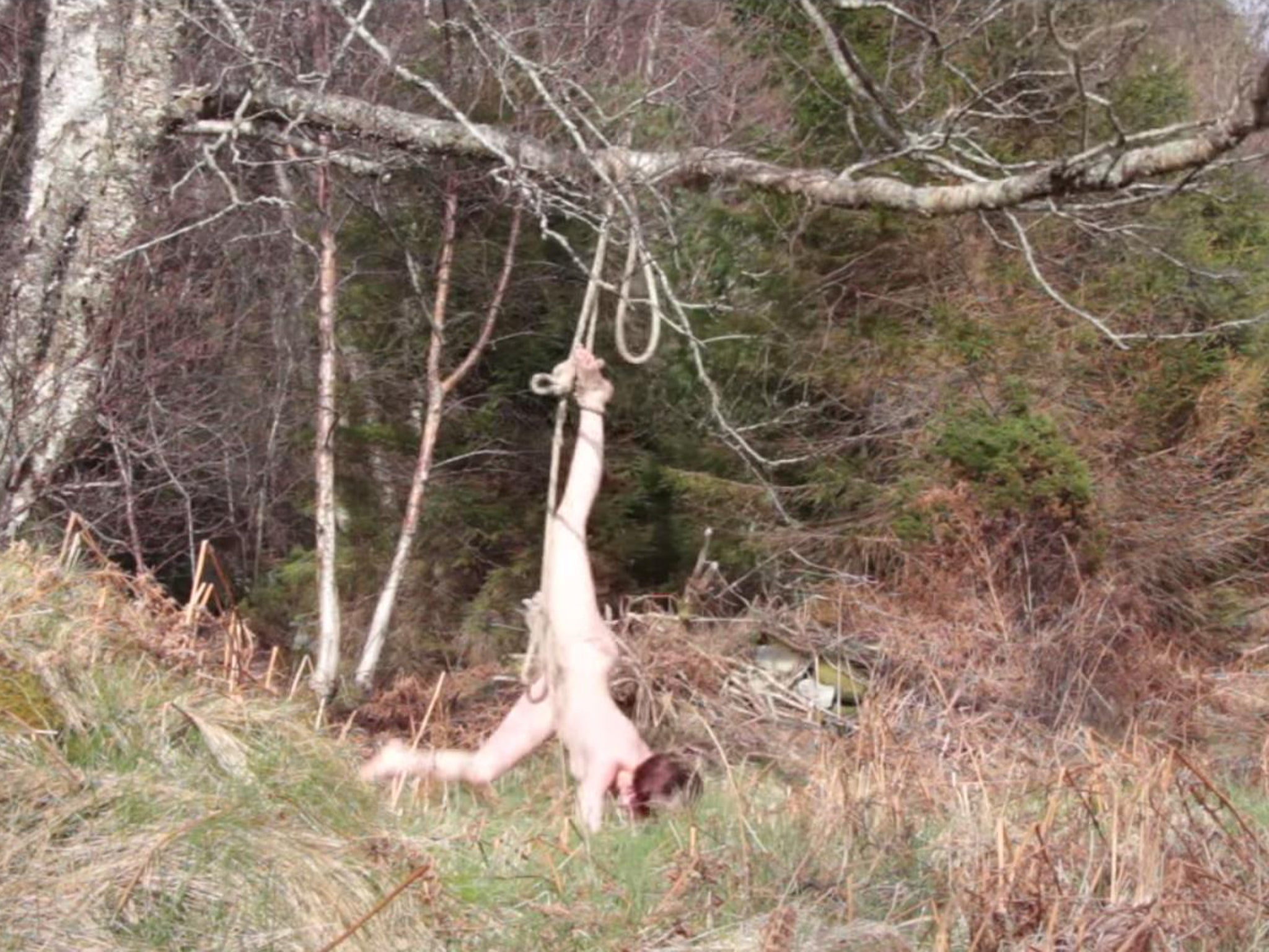 Sex in tree stands