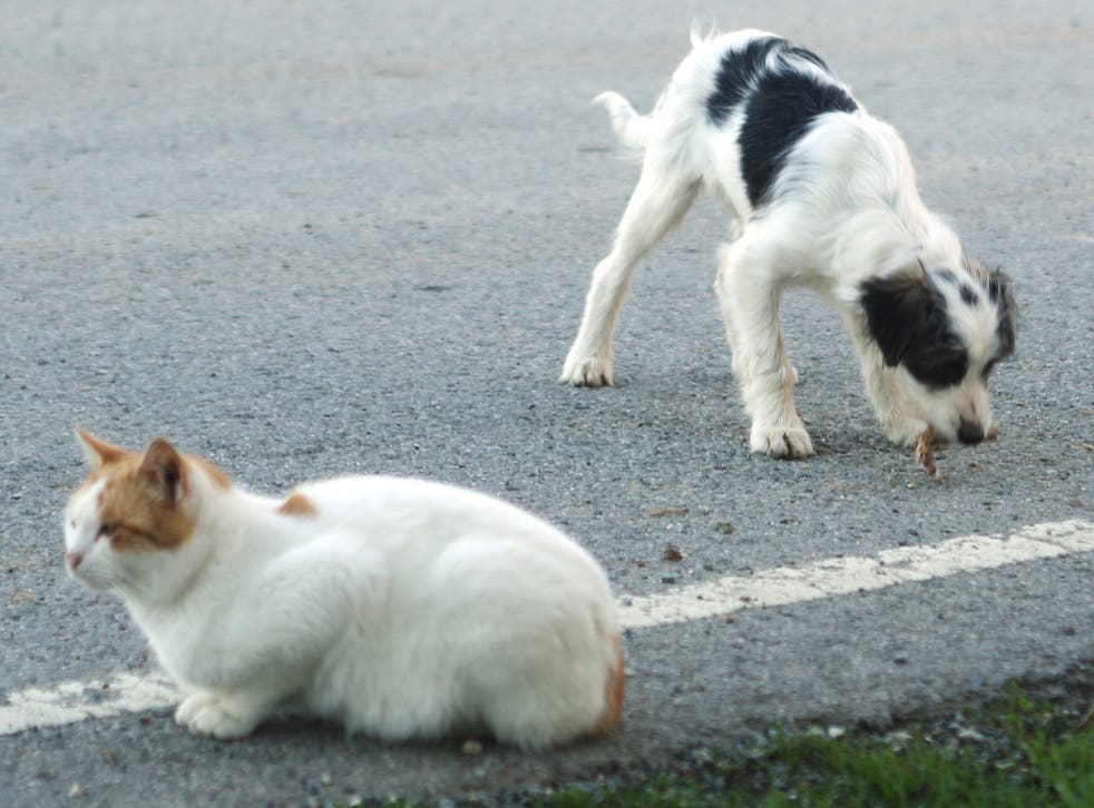 Cats and dogs in Trigueros del Valle now have similar rights to men and women. File photo