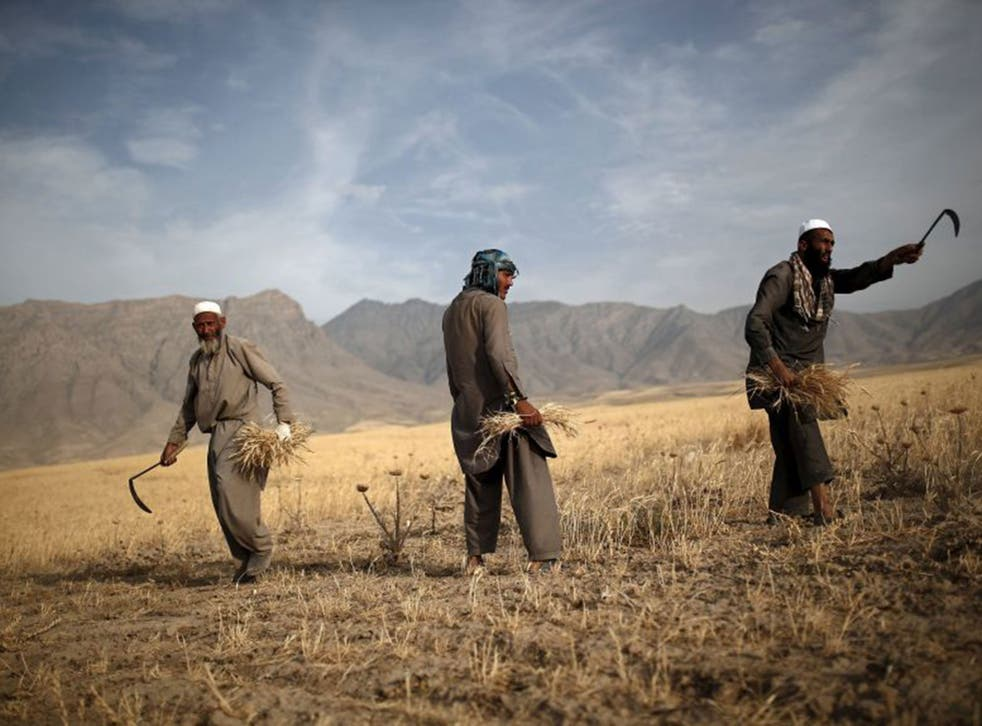 Afghan men harvest wheat on the outskirts of Kabul, Afghanistan July 23, 2015.
