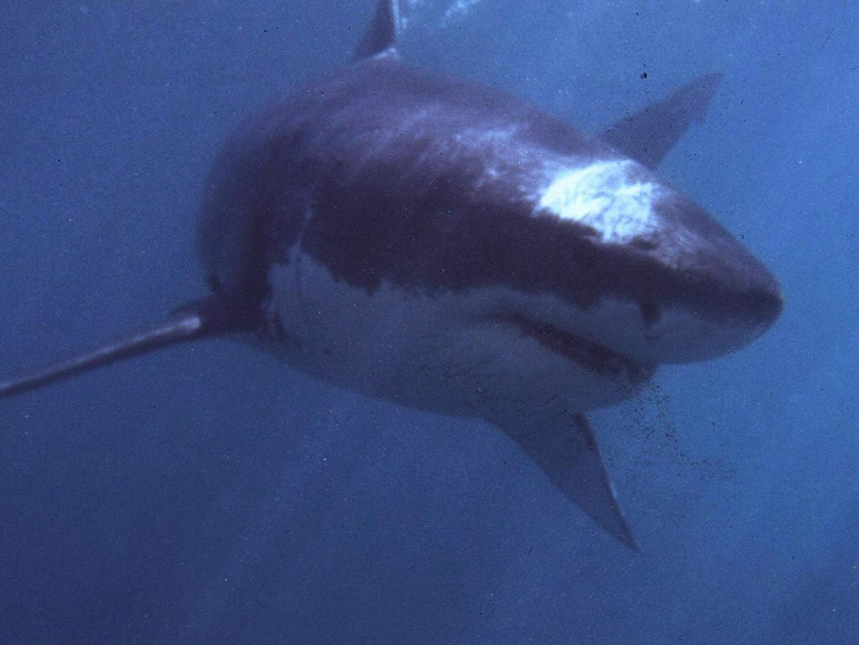 Woman Witnesses Tasmania Shark Attack That Killed Her