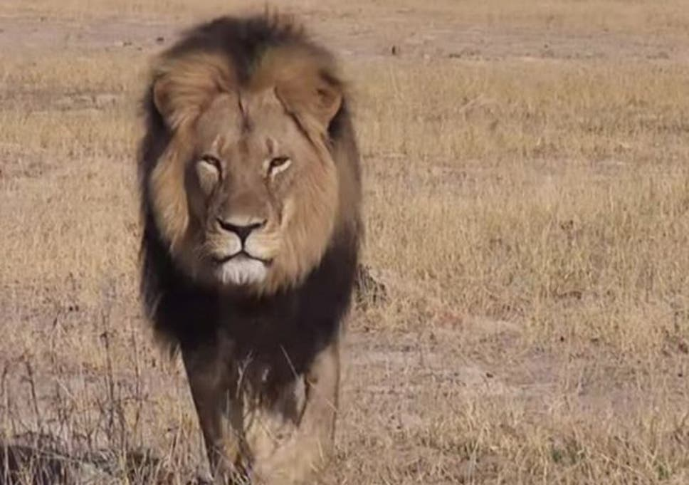 Donald Trump administration lifts ban on importing lion hunt